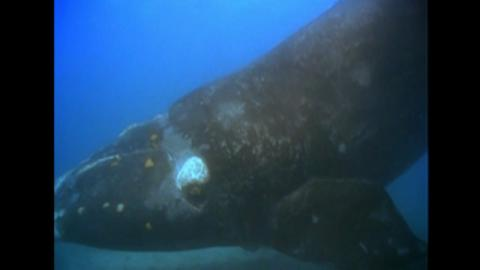 Whale Swingers