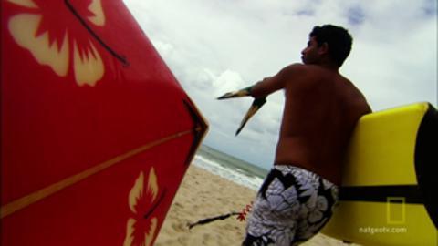 Shark Attacks Surfer in Brazil