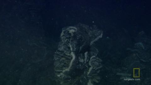 Bizzare Underwater Creatures Discovered