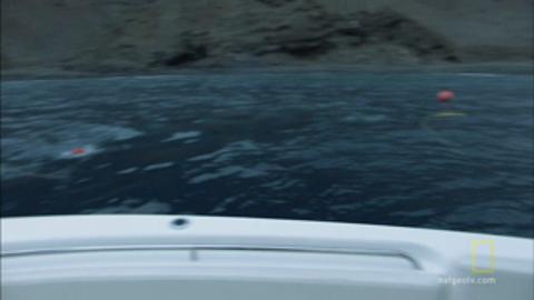 Great White Shark bites hook