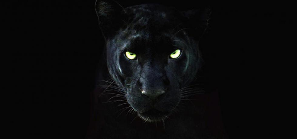亞洲大貓兵團