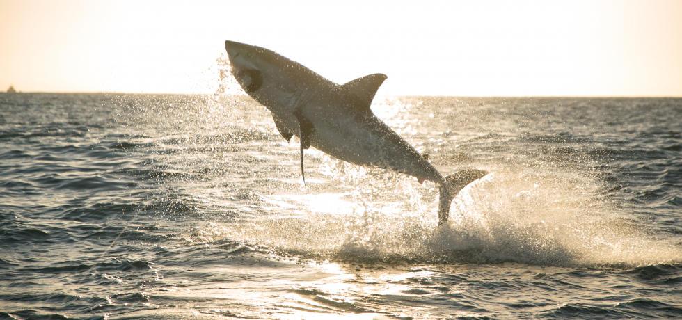 鯊魚大集合