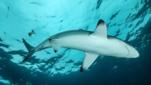 Blacktip Sharks hunting.  This image... [Photo of the day - 27 JANUARY 2020]