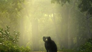 A lone sloth bear sits on a road in... [Photo of the day - 28 JANUARY 2020]