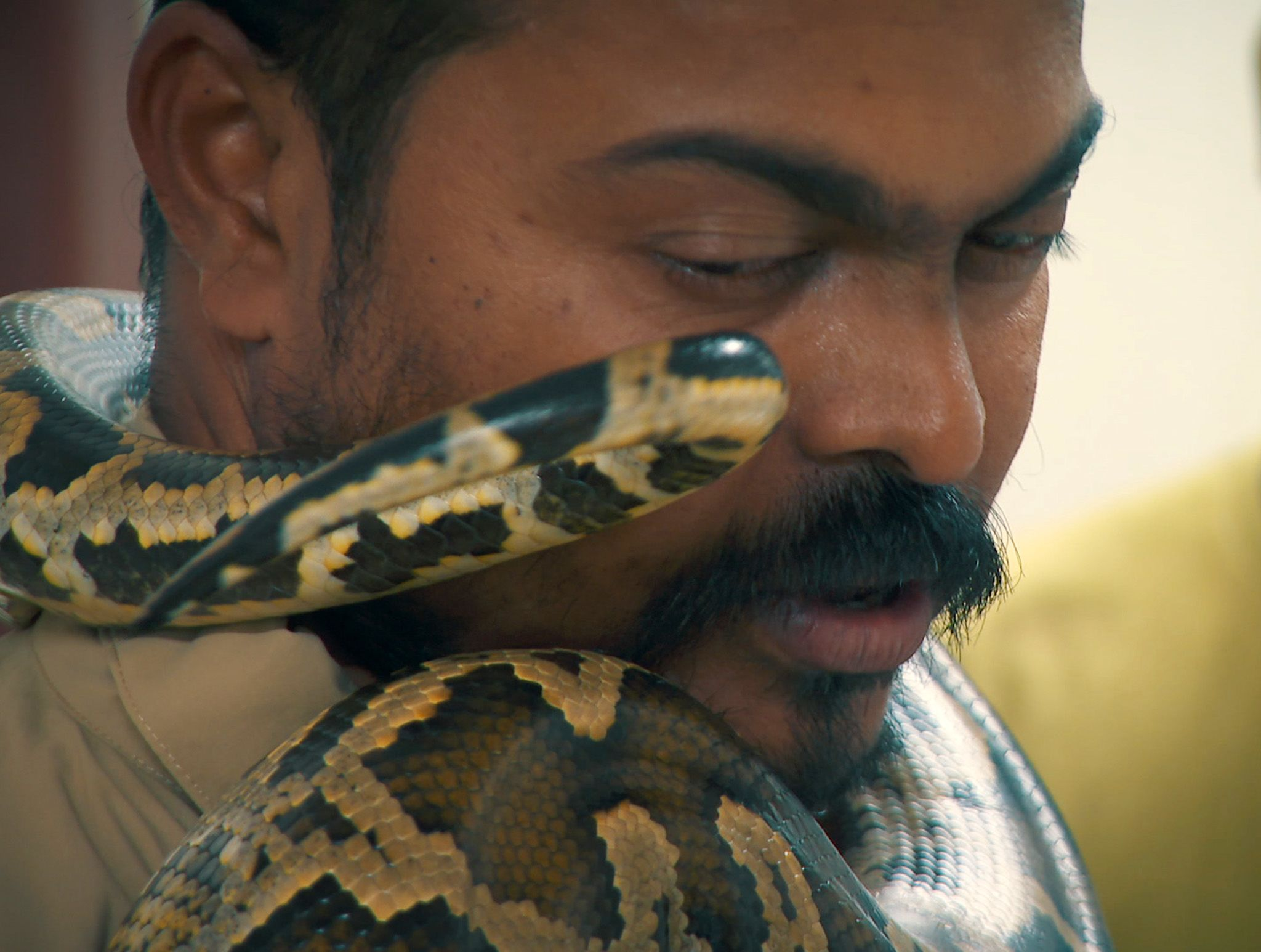 A python wraps around Baiju Raj's neck.  This image is from Jungle Heroes. [Photo of the day - February 2020]