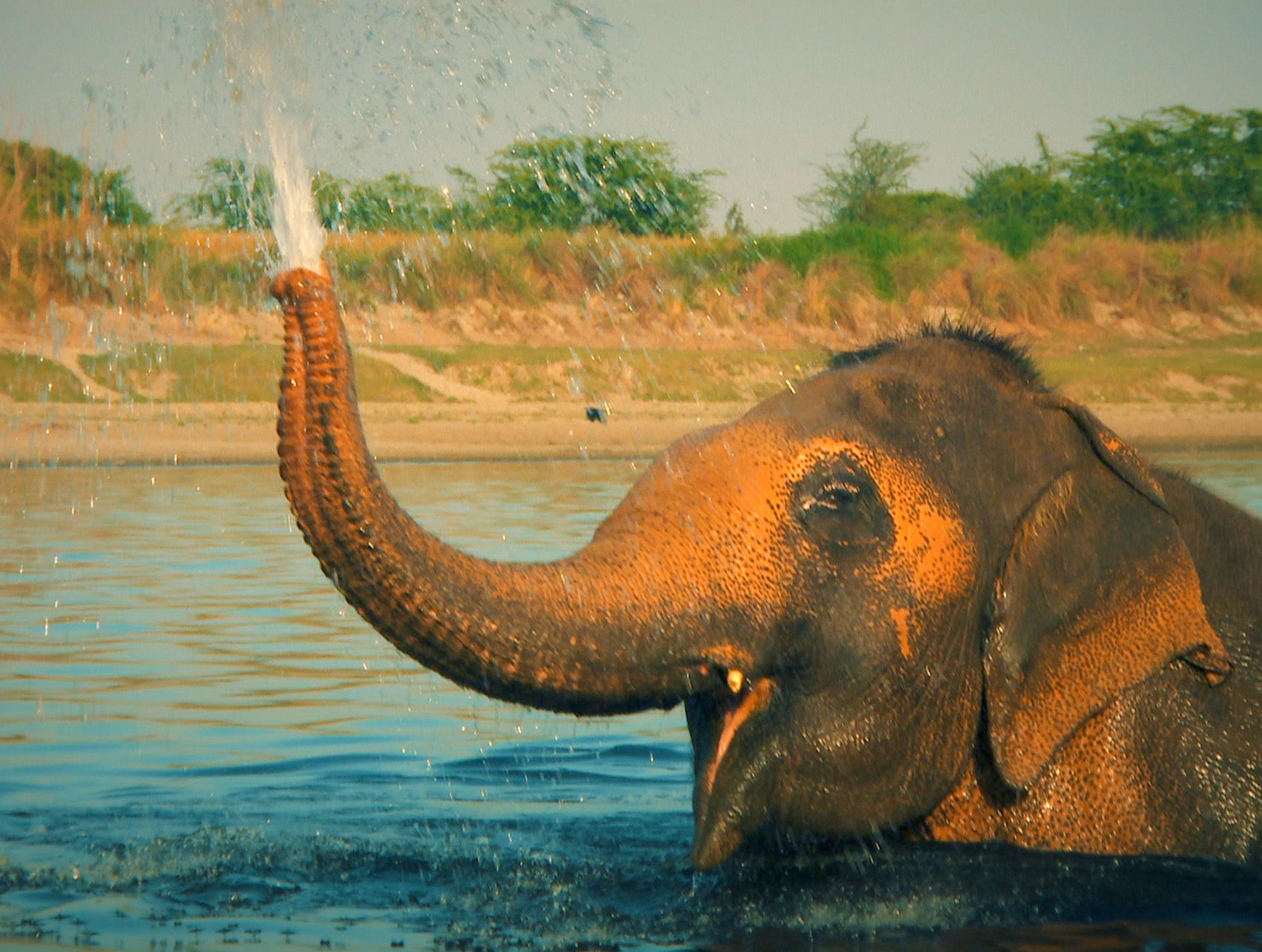 An elephant plays in the water.  This image is from Jungle Heroes. [Photo of the day - February 2020]