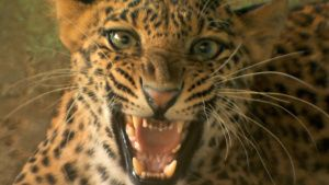 Angel the leopard at the Wildlife... [Photo of the day - 21 FEBRUARY 2020]