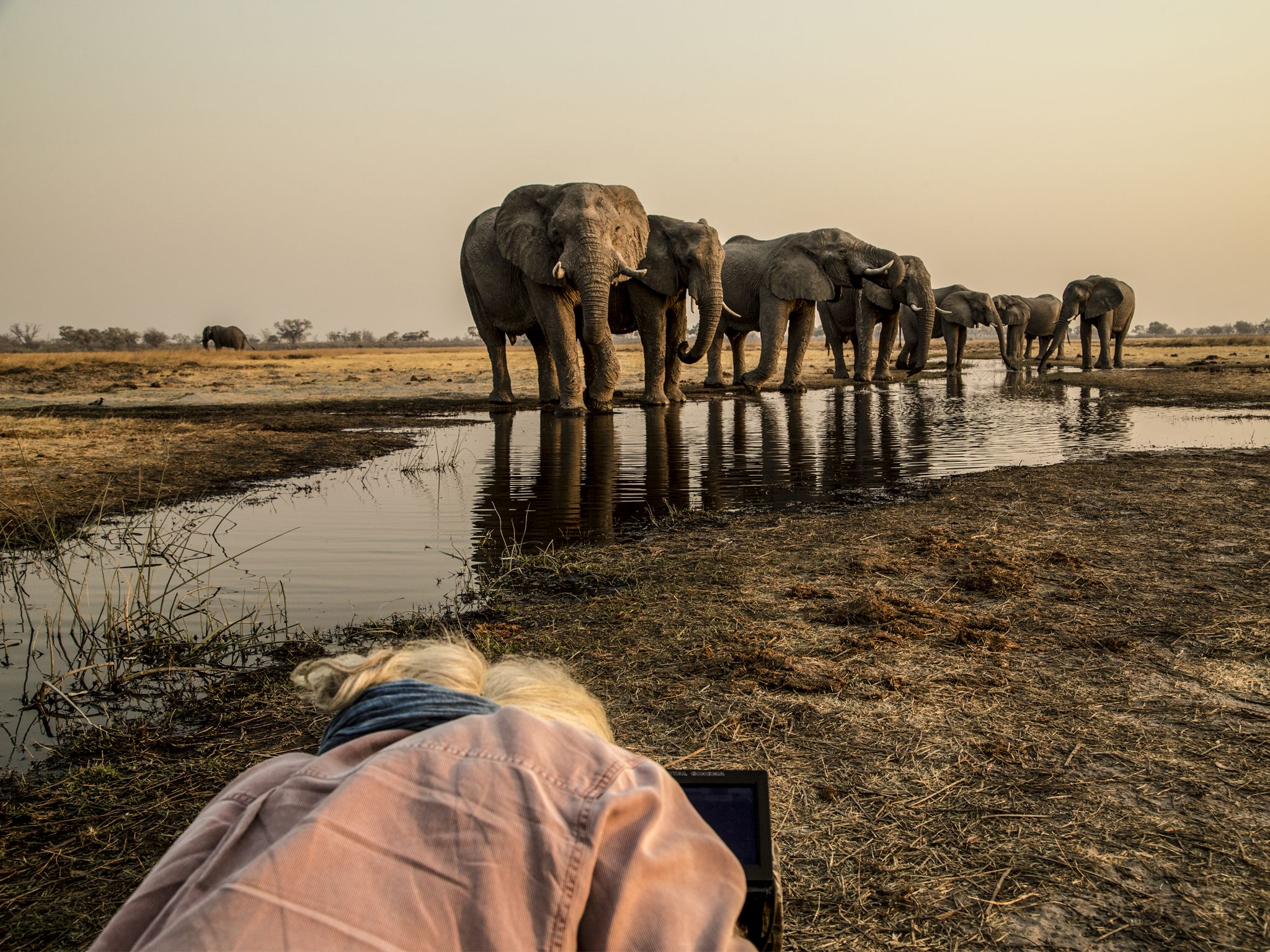 Dereck Joubert lying on the ground filming a herd of elephants drinking from a small spillway.... [Photo of the day - April 2020]