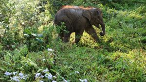 Xishuangbanna Wild Elephant Park,... [Photo of the day -  7 JUNE 2020]