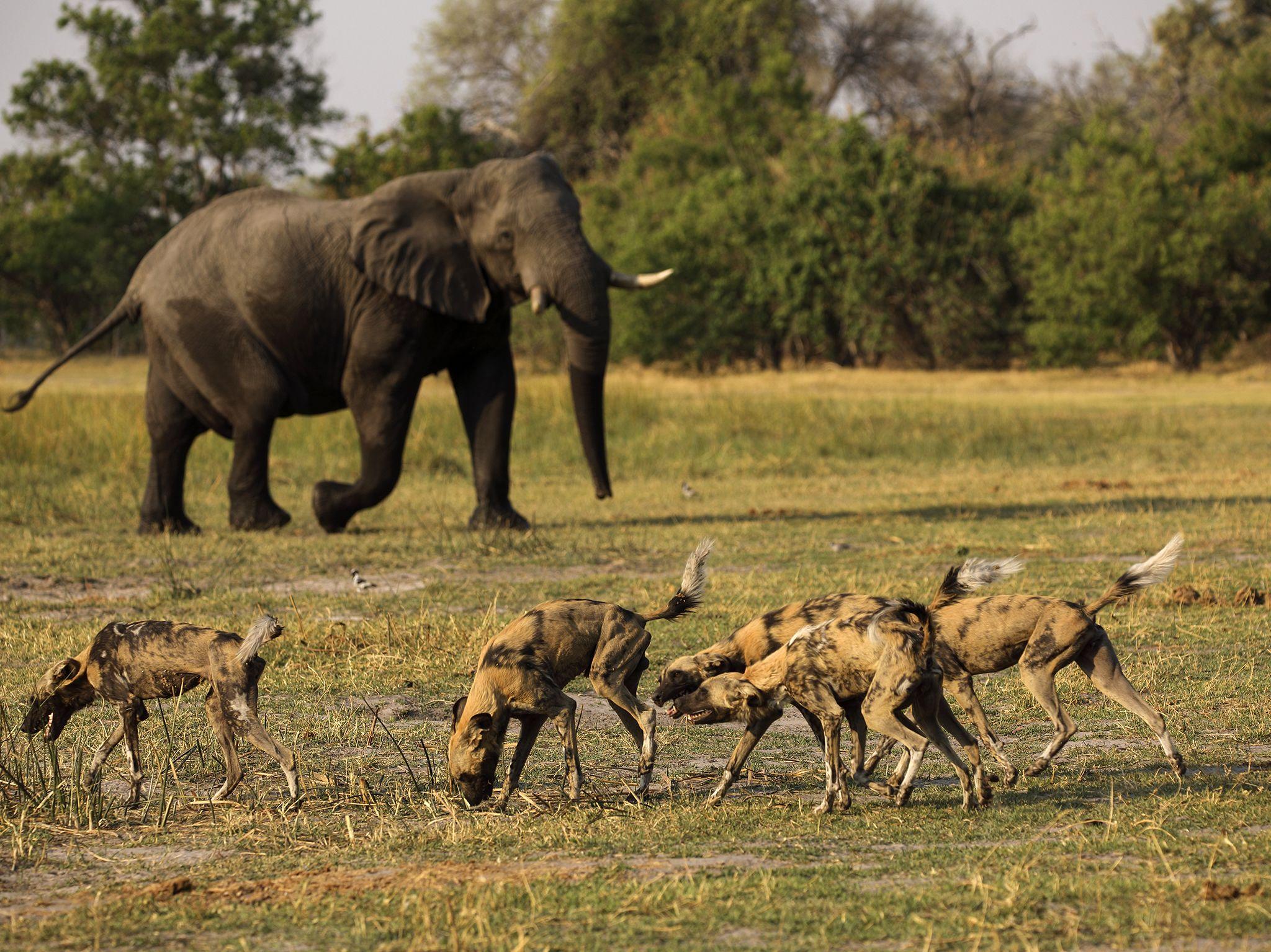محمية موريمي للحياة البرية، دلتا أوكافانغو،... [Photo of the day - يونيو 2020]