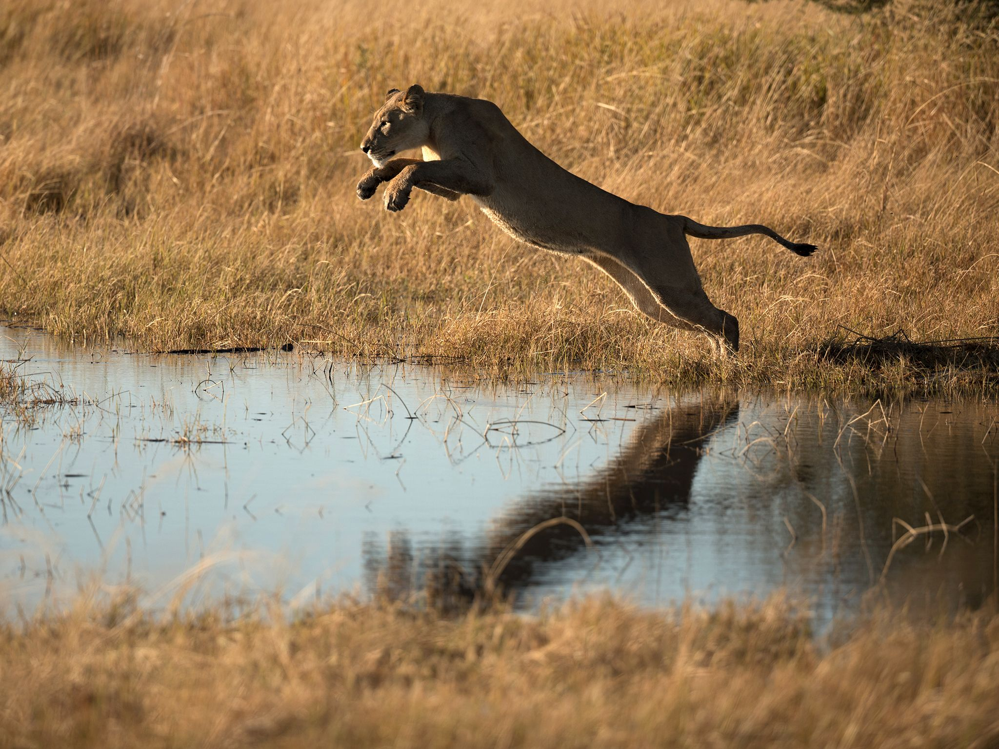 Moremi Game Reserve, Okavango Delta, Botswana:  The deep channels of the Okavango Delta... [Photo of the day - June 2020]