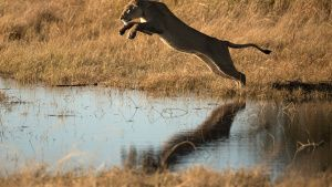 Moremi Game Reserve, Okavango Delta,... [Photo of the day - 30 JUNE 2020]