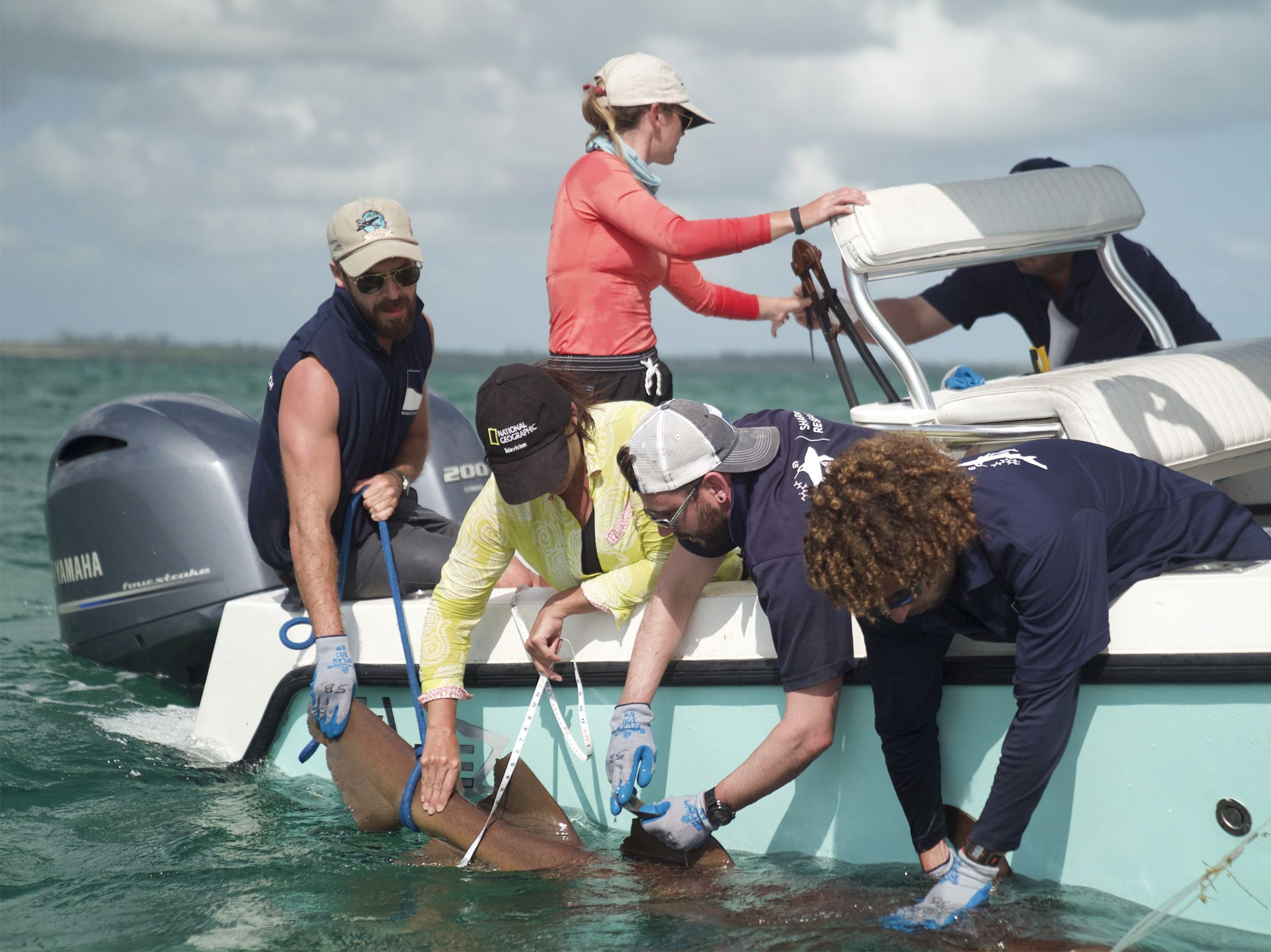 Tagging a shark in the Bahamas. This image is from Sharks of the Bermuda Triangle. [Photo of the day - July 2020]