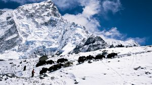 Surviving Everest expedition on... [Photo of the day - 16 JULY 2020]