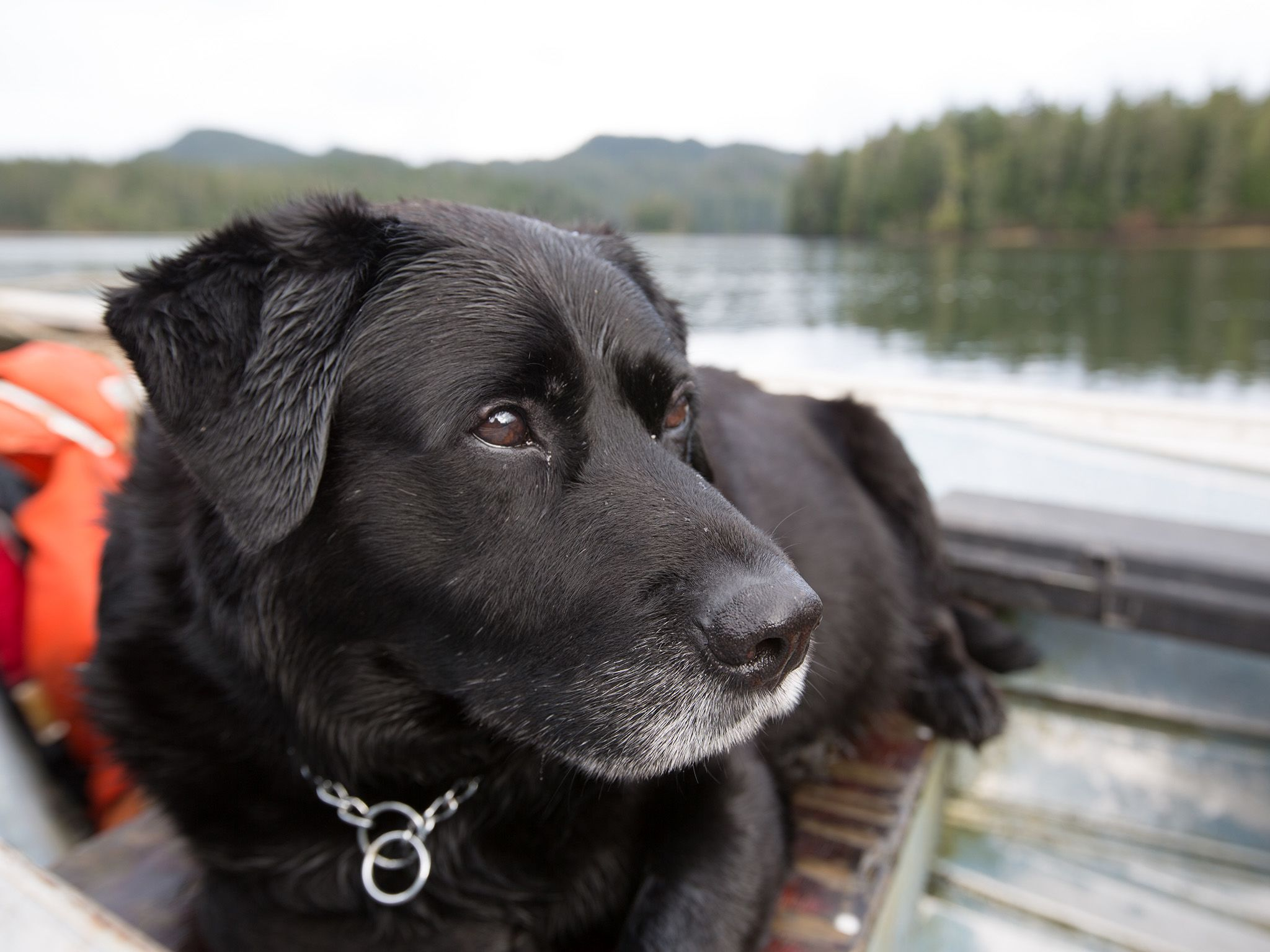 """Tim """"Curly"""" Leach's dog, Jethro, rides along for a goose hunt in Port Protection. This image is... [Photo of the day - September 2020]"""