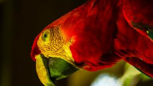 A Red and Green Macaw. This image is... [Photo of the day - 22 OCTOBER 2020]