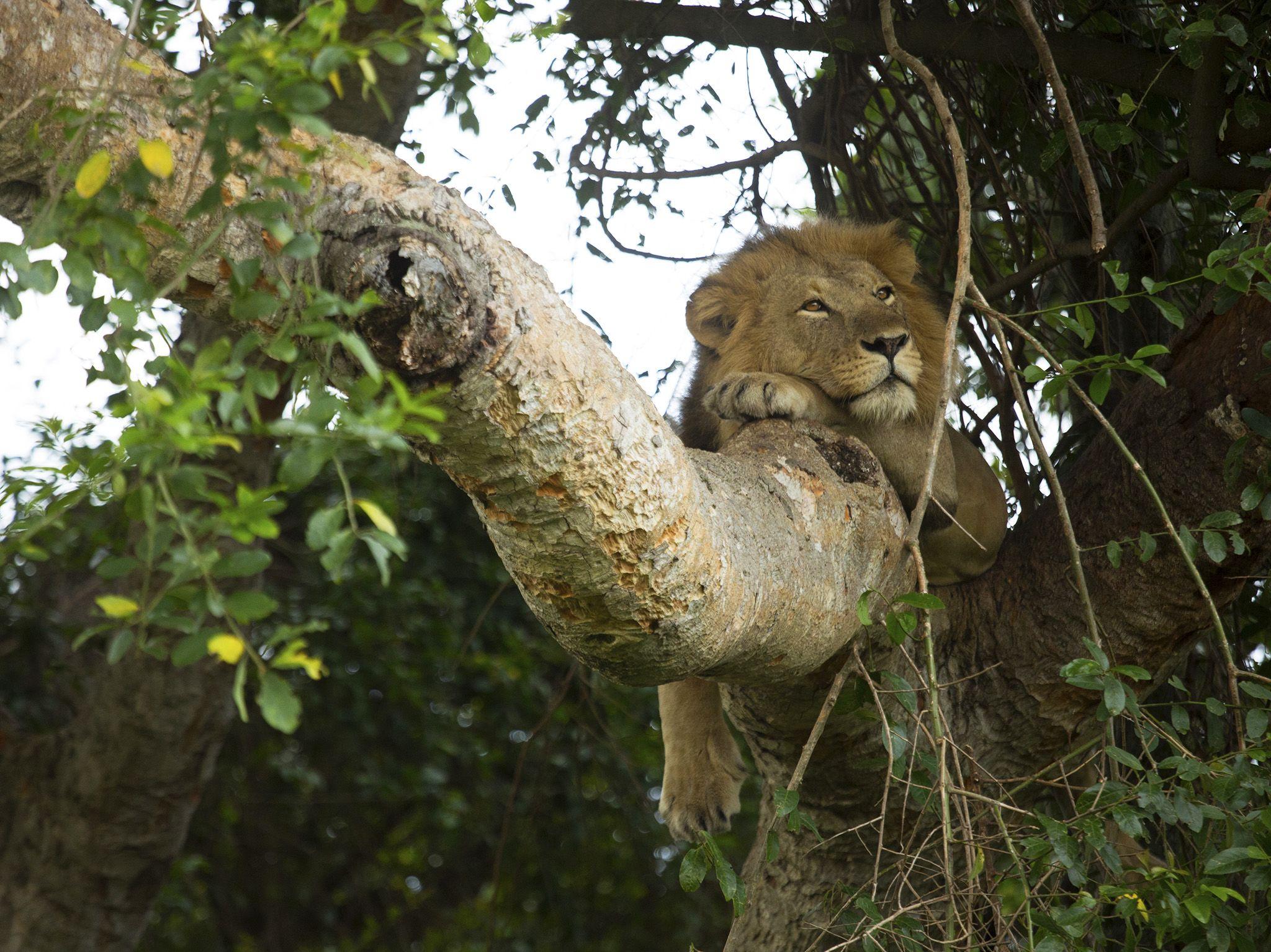 حديقة الملكة إليزابيث الوطنية، أوغندا. هذه الصورة من... [Photo of the day - أكتوبر 2020]