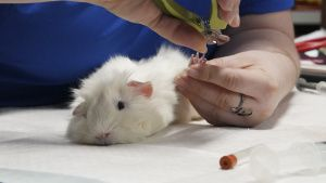Vet Tech Tonya Green cuts Barbie the... [Photo of the day - 28 OCTOBER 2020]