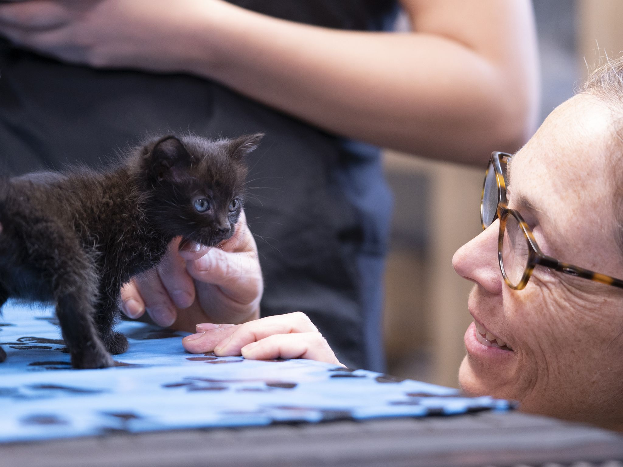 Dr. Michelle Oakley pets a kitten on her exam table. This image is from Dr. Oakley, Yukon Vet. [Photo of the day - November 2020]
