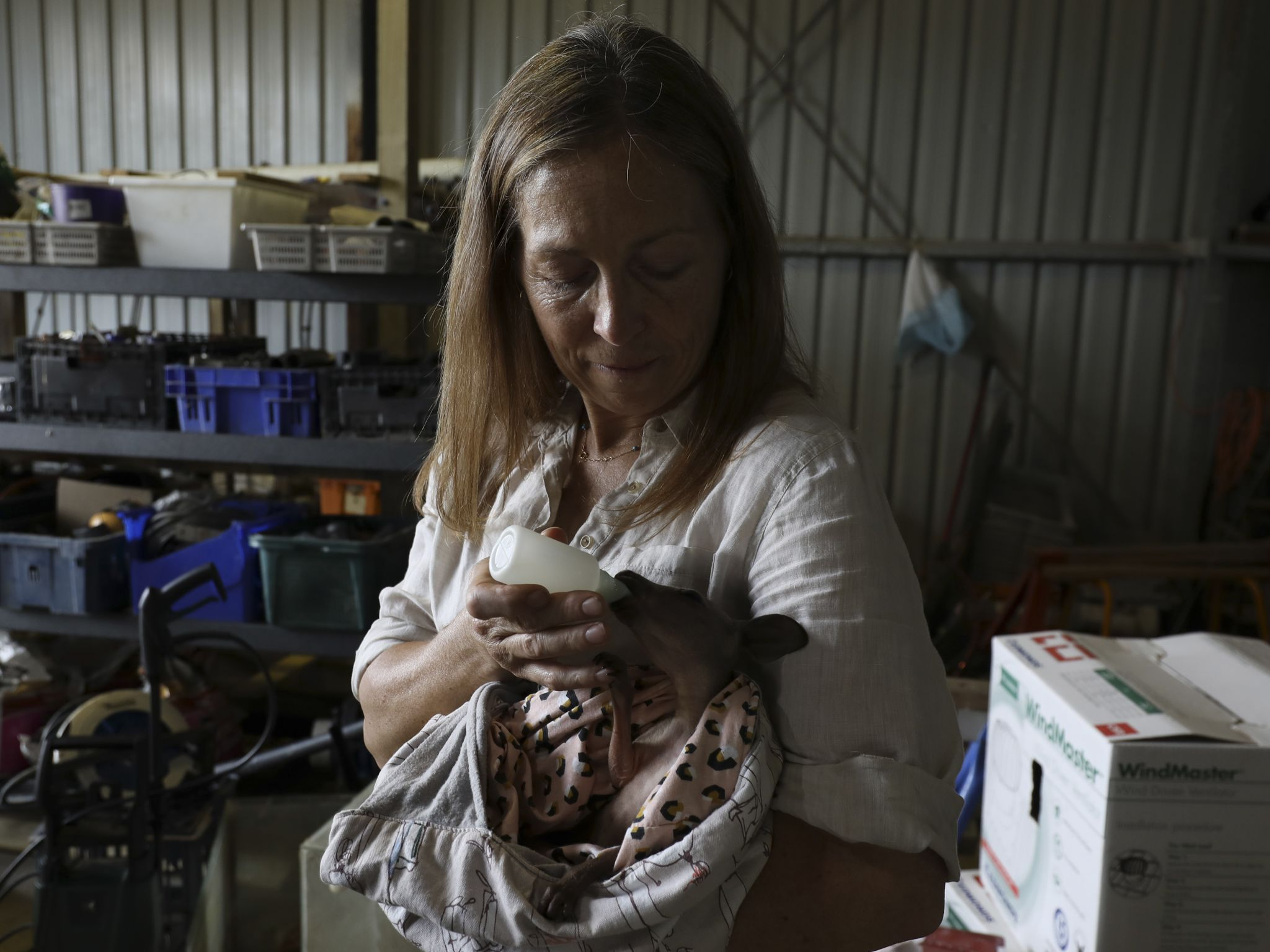 Dr. Michelle Oakley nurses a baby kangaroo back to health. This imagen is from Dr. Oakley, Yukon... [Photo of the day - November 2020]