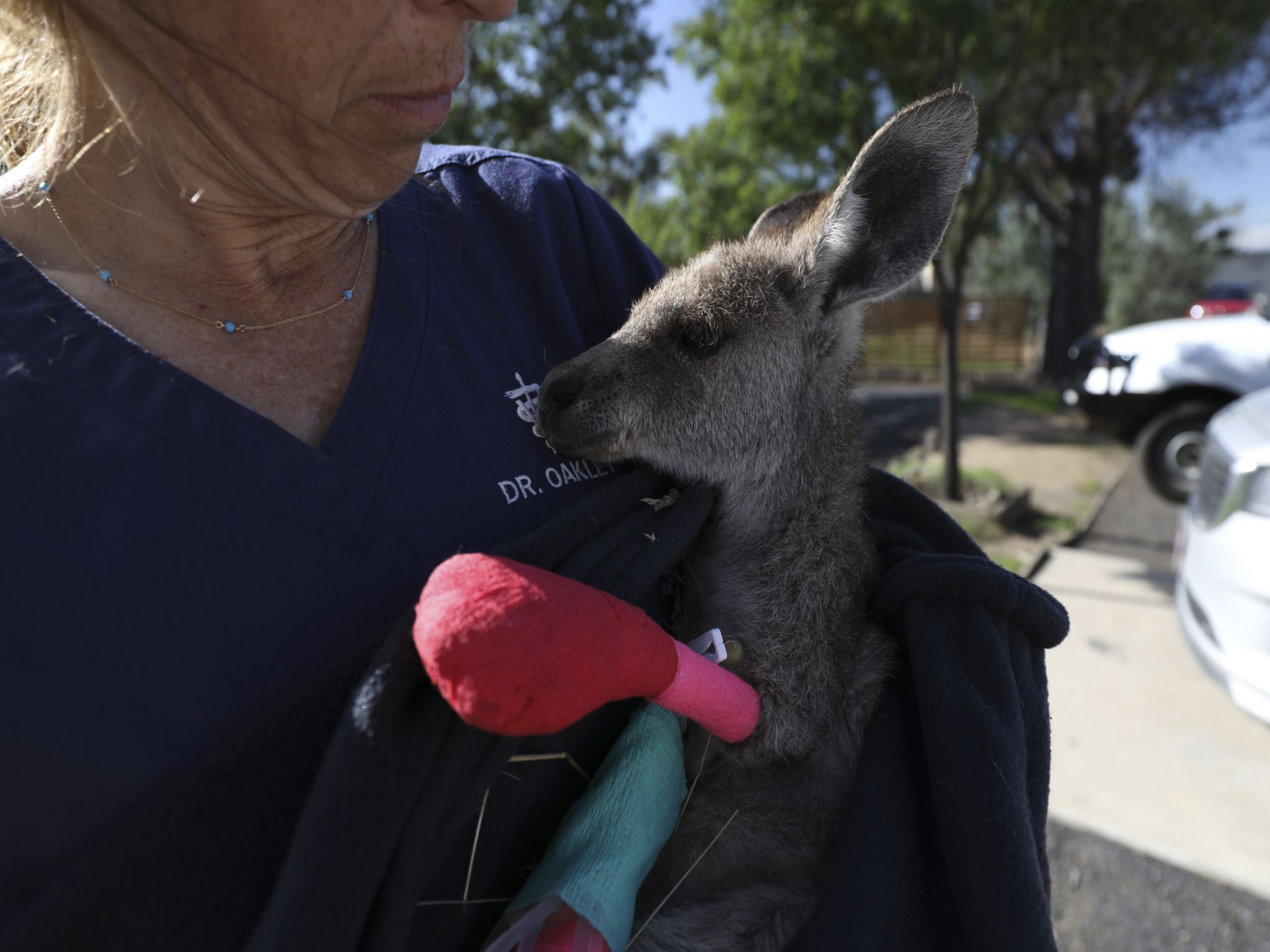 Dr. Michelle Oakley holds a recovering kangaroo. This image is from Dr. Oakley, Yukon Vet. [Photo of the day - November 2020]