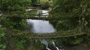The double decker root bridges. This... [Photo of the day -  4 DECEMBER 2020]