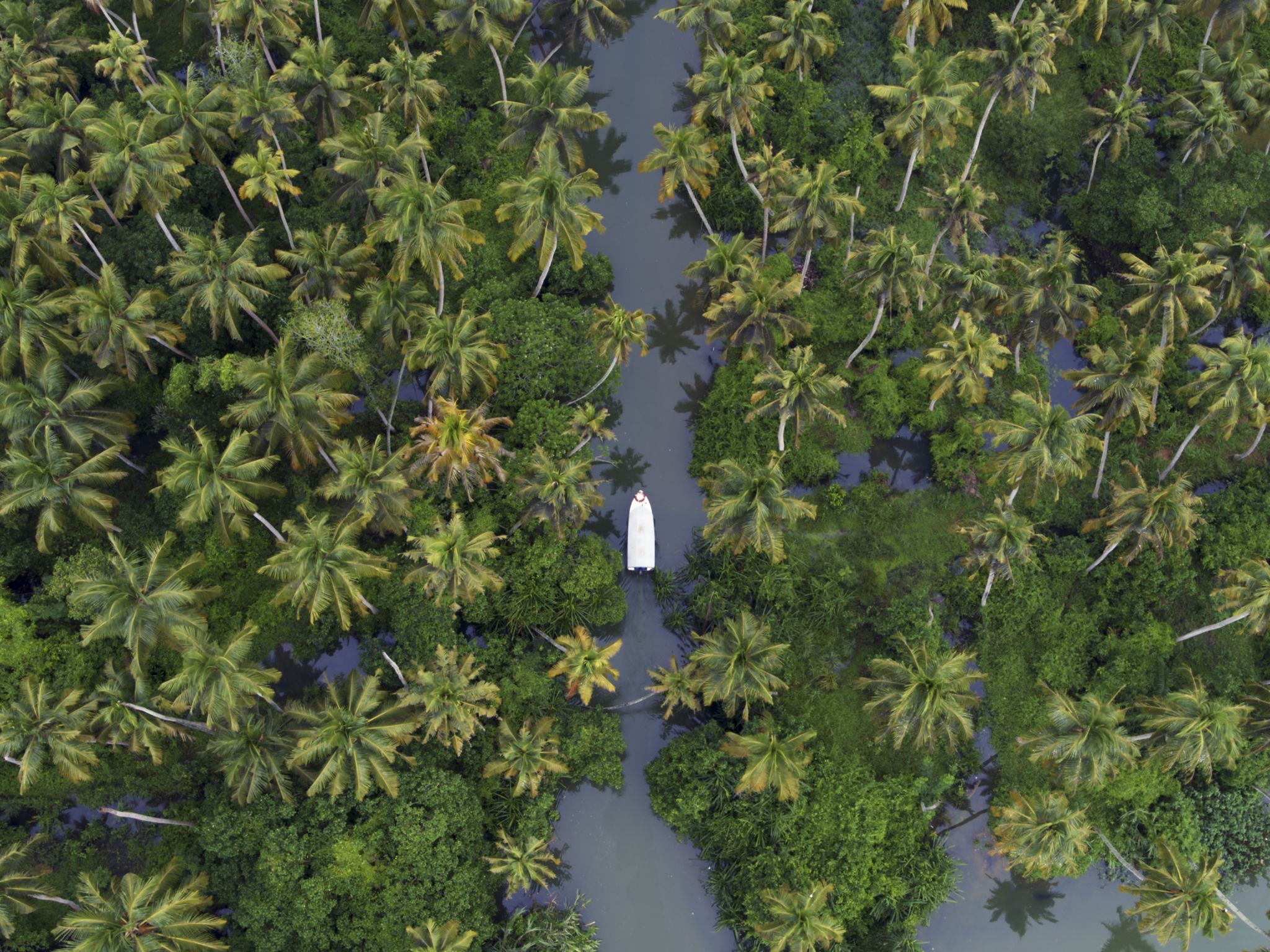 The scenic backwaters of Kerala. This image is from India from Above. [Photo of the day - December 2020]