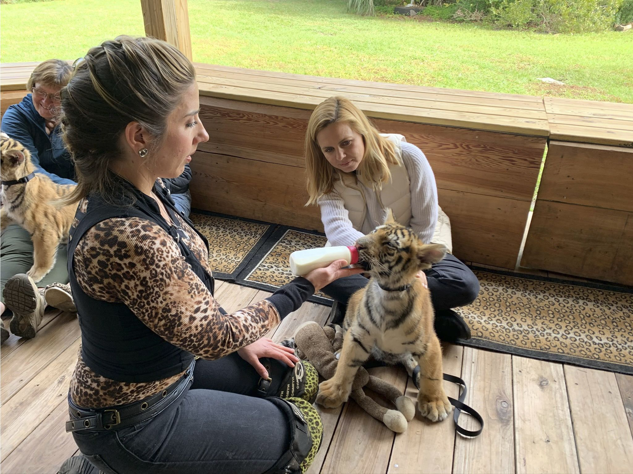Mariana van Zeller (R) interacts with a tiger cub and a Myrtle Beach Safari handler. This image... [Photo of the day - January 2021]