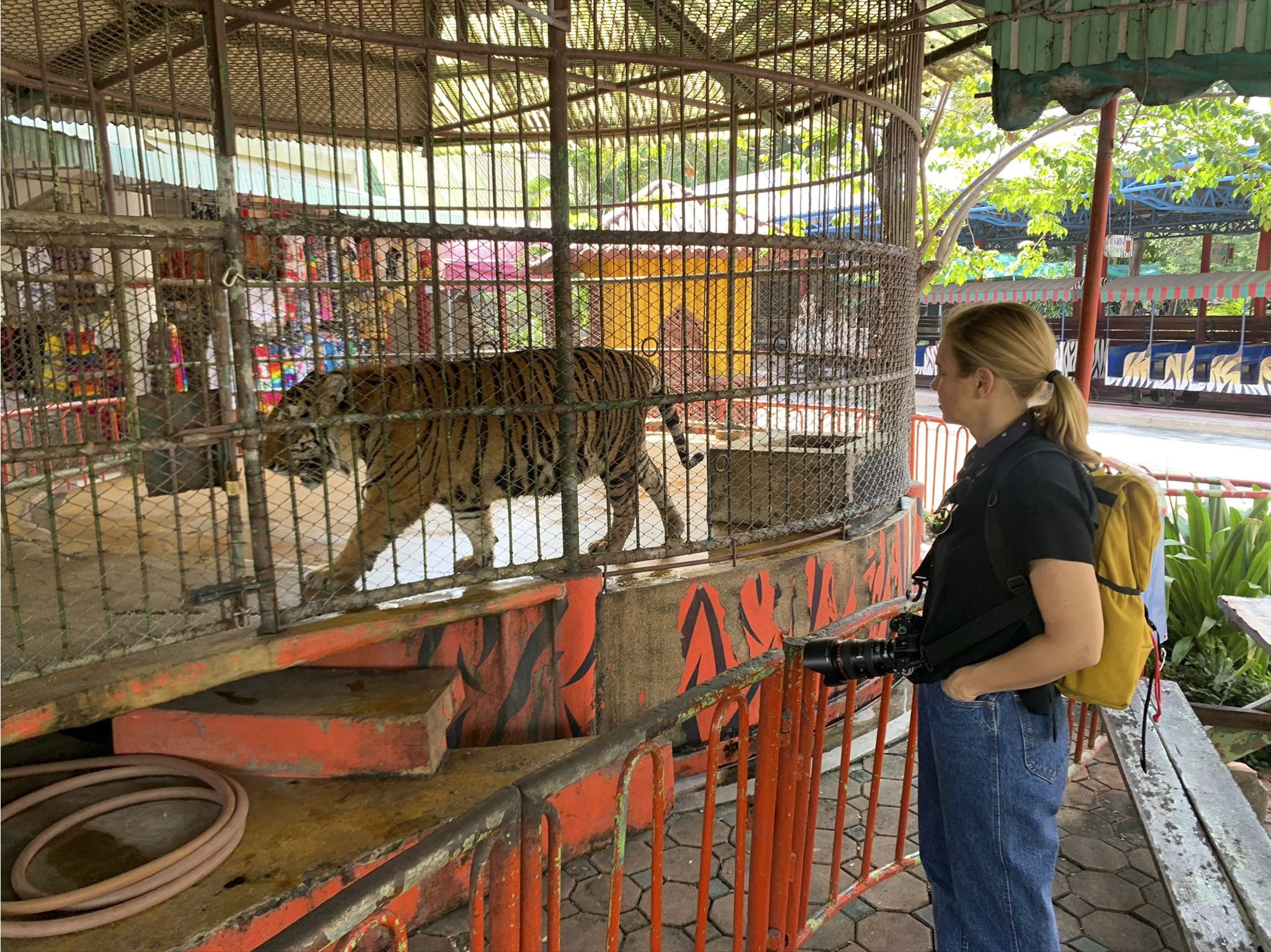 Mariana van Zeller visits a tiger zoo in the outskirts of Bangkok, Thailand. This image is from... [Photo of the day - January 2021]