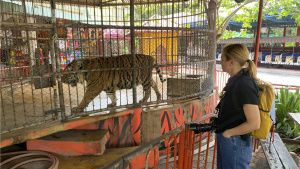 Mariana van Zeller visits a tiger... [Photo of the day - 29 JANUARY 2021]