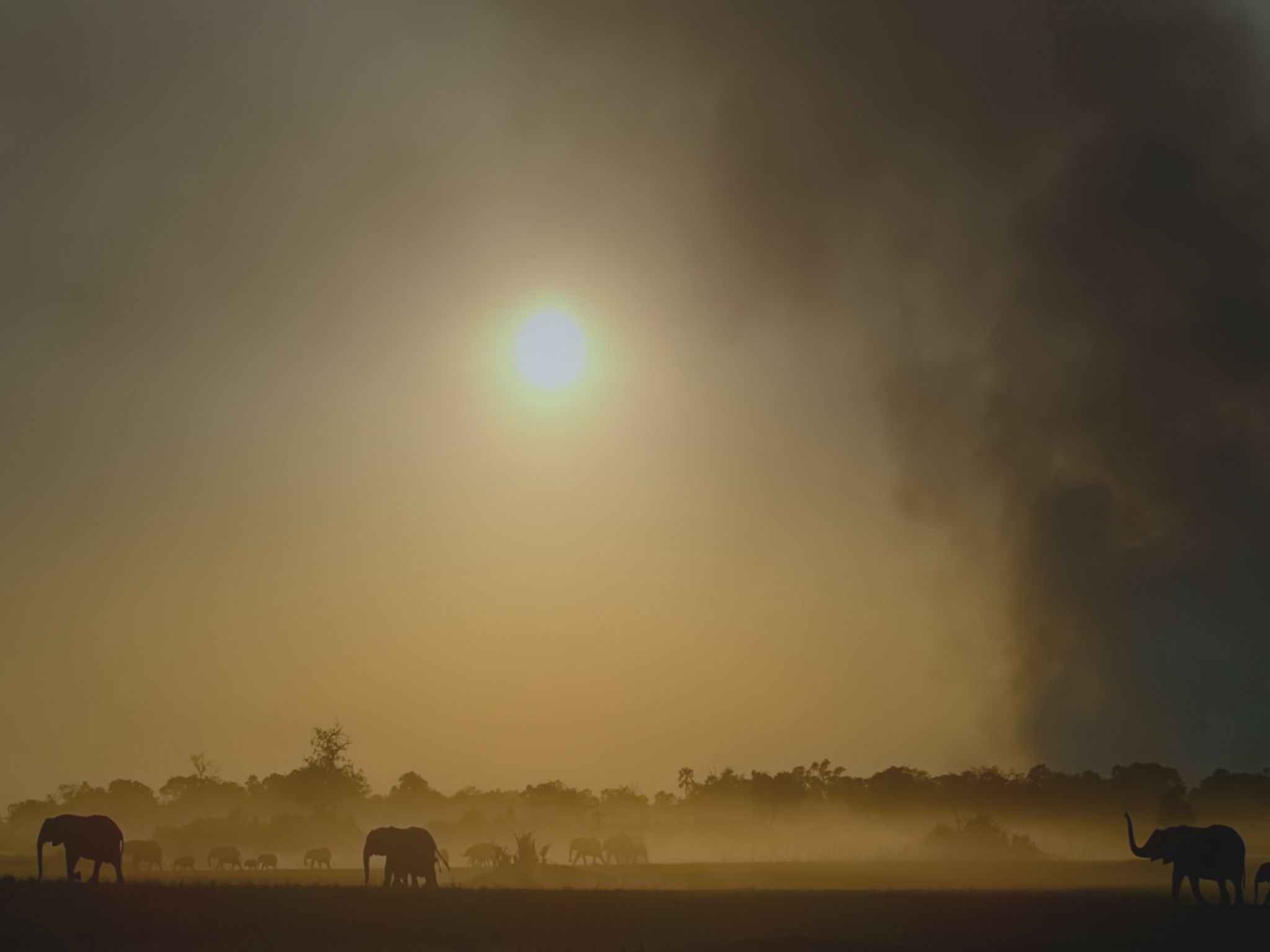 Elephants walking at sunset with smoke in the background. This image is from Savage Kingdom. [Photo of the day - January 2021]