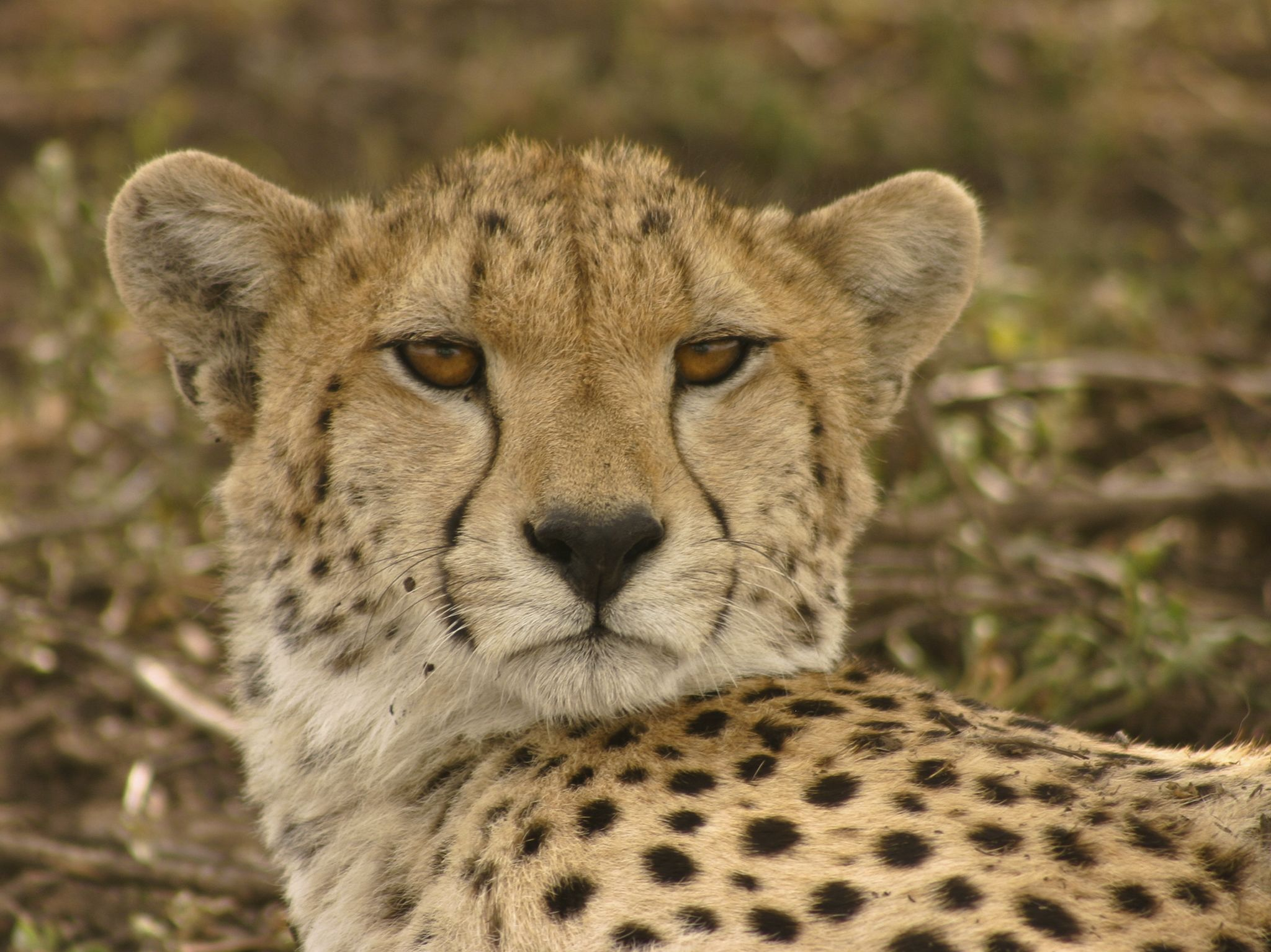 Nzuri. This image is from Serengeti Speed Queen. [Photo of the day - February 2020]