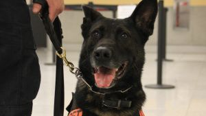 K9 Jax the dog. This image is from... [Photo of the day -  3 MARCH 2021]