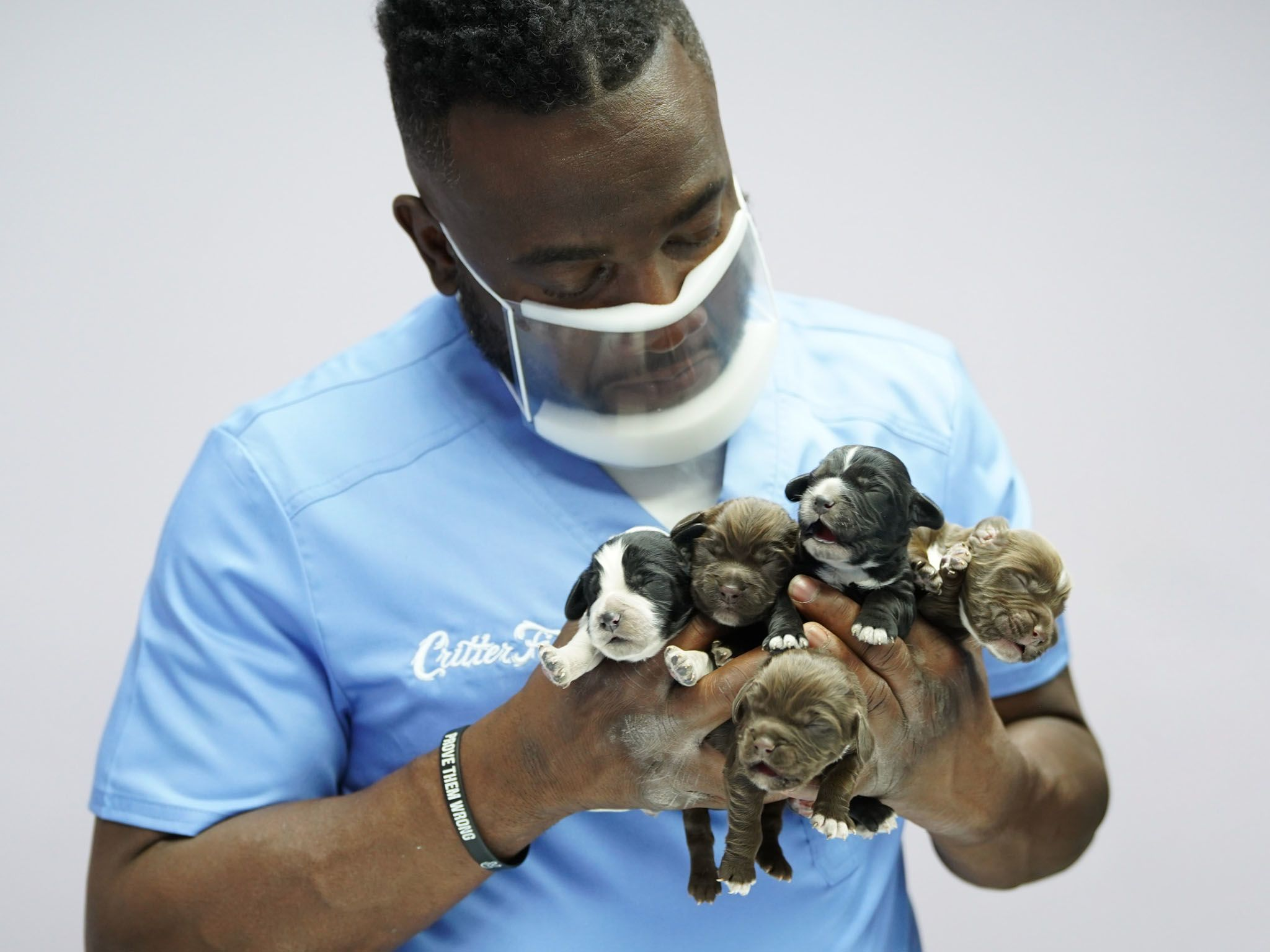 DescriptorDr. Hodges examines five newborn puppies at Critter Fixer Veterinary Hospital in... [Photo of the day - May 2021]