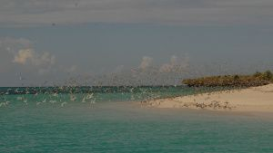 Fanjove Island, Tanzania - Birds on... [Photo of the day - 11 MAY 2021]