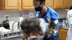 Vet Tech Darrie preps a Sheltie dog... [Photo of the day - 12 MAY 2021]