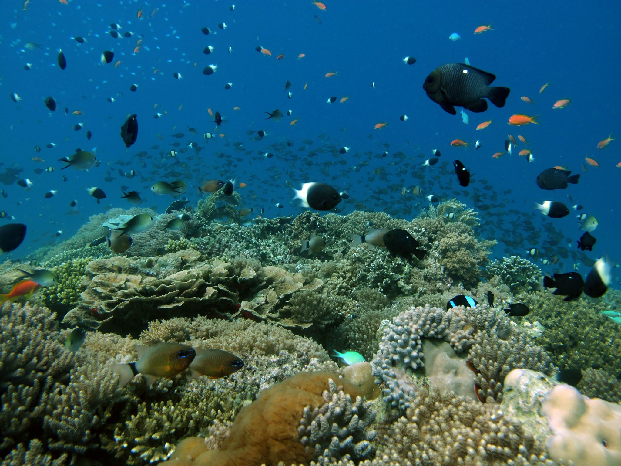 Maziwe Island, Tanzania - Reef of the island. This is from Jane Goodall: Saving Paradise. [Photo of the day - May 2021]