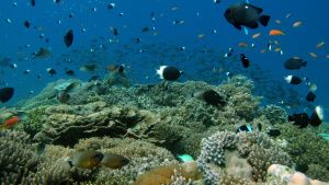 Maziwe Island, Tanzania - Reef of... [Photo of the day - 18 MAY 2021]