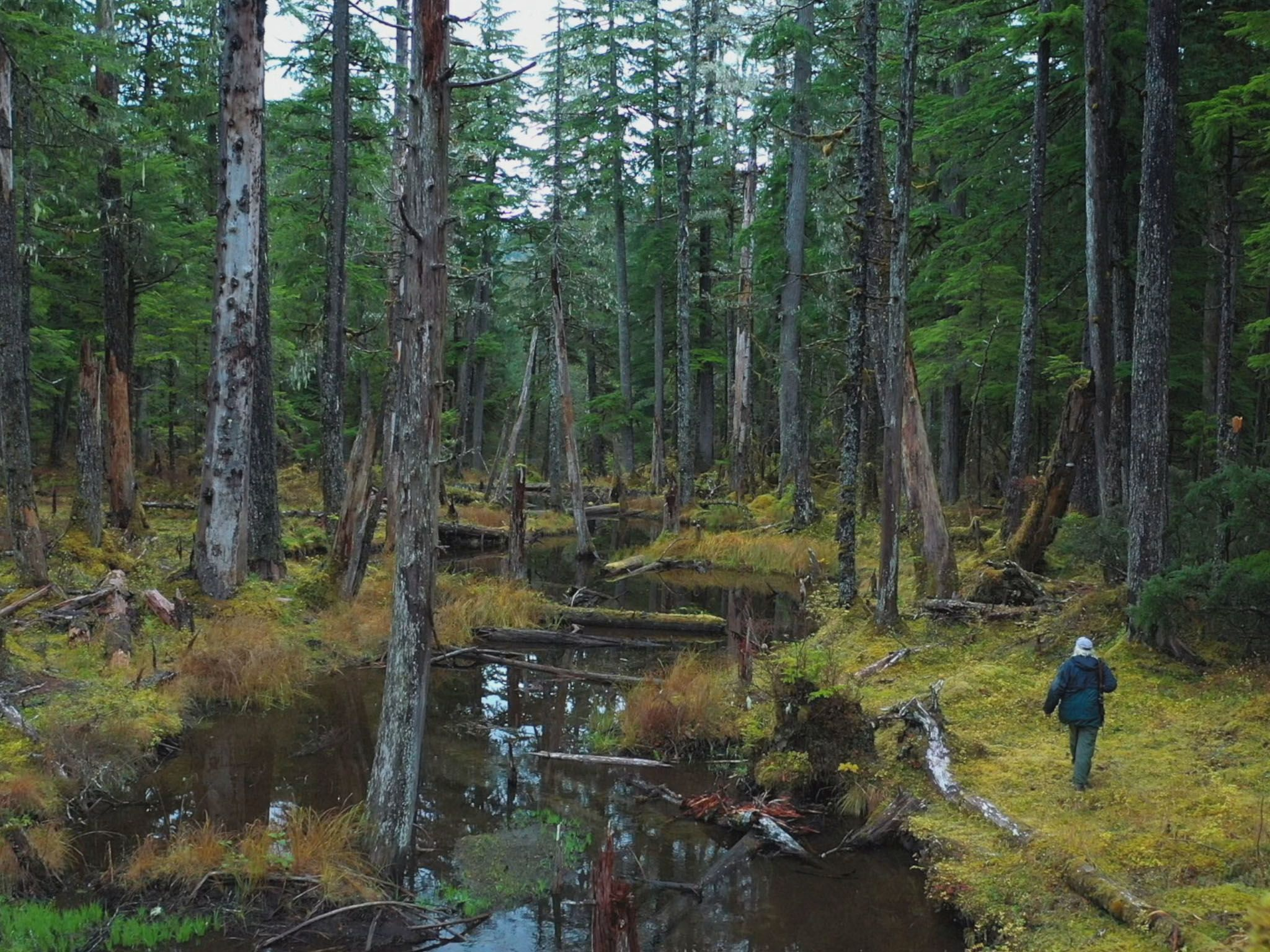 Gary Muhelberger begins his trek through the forest near Port Protection to hunt for deer. This... [Photo of the day - May 2021]