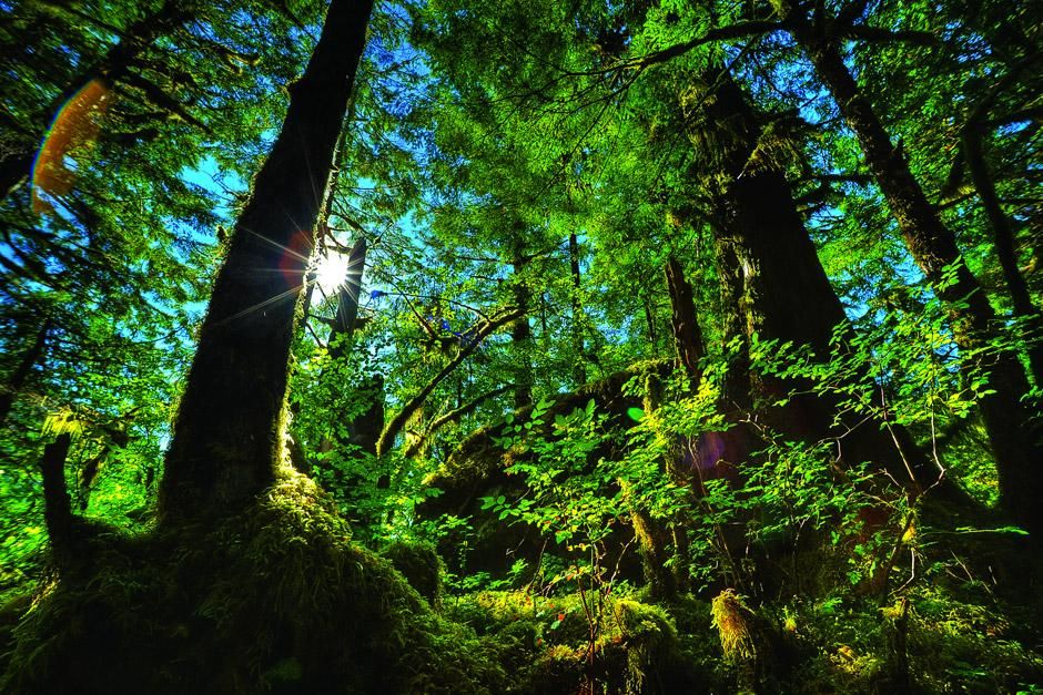 Temperate Rain Forest British Columbia, Canada. This image is from Untamed Americas. [Photo of the day - 六月 2012]