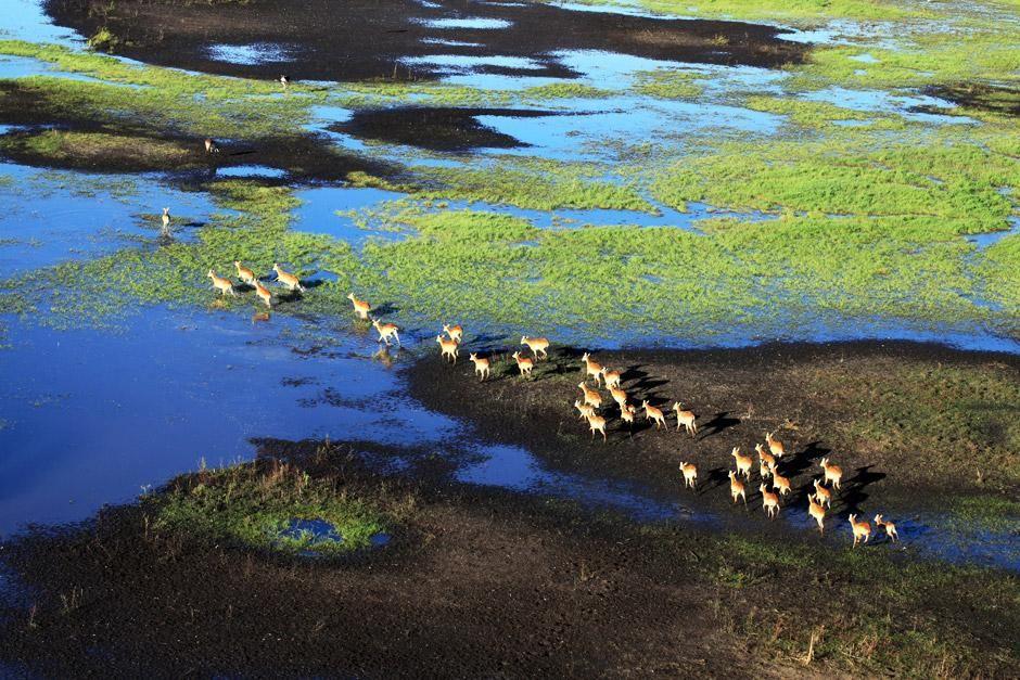 تترك الظباء المراعي العشبية التي غمرتها المياه. هذه... [Photo of the day - يونيو 2012]