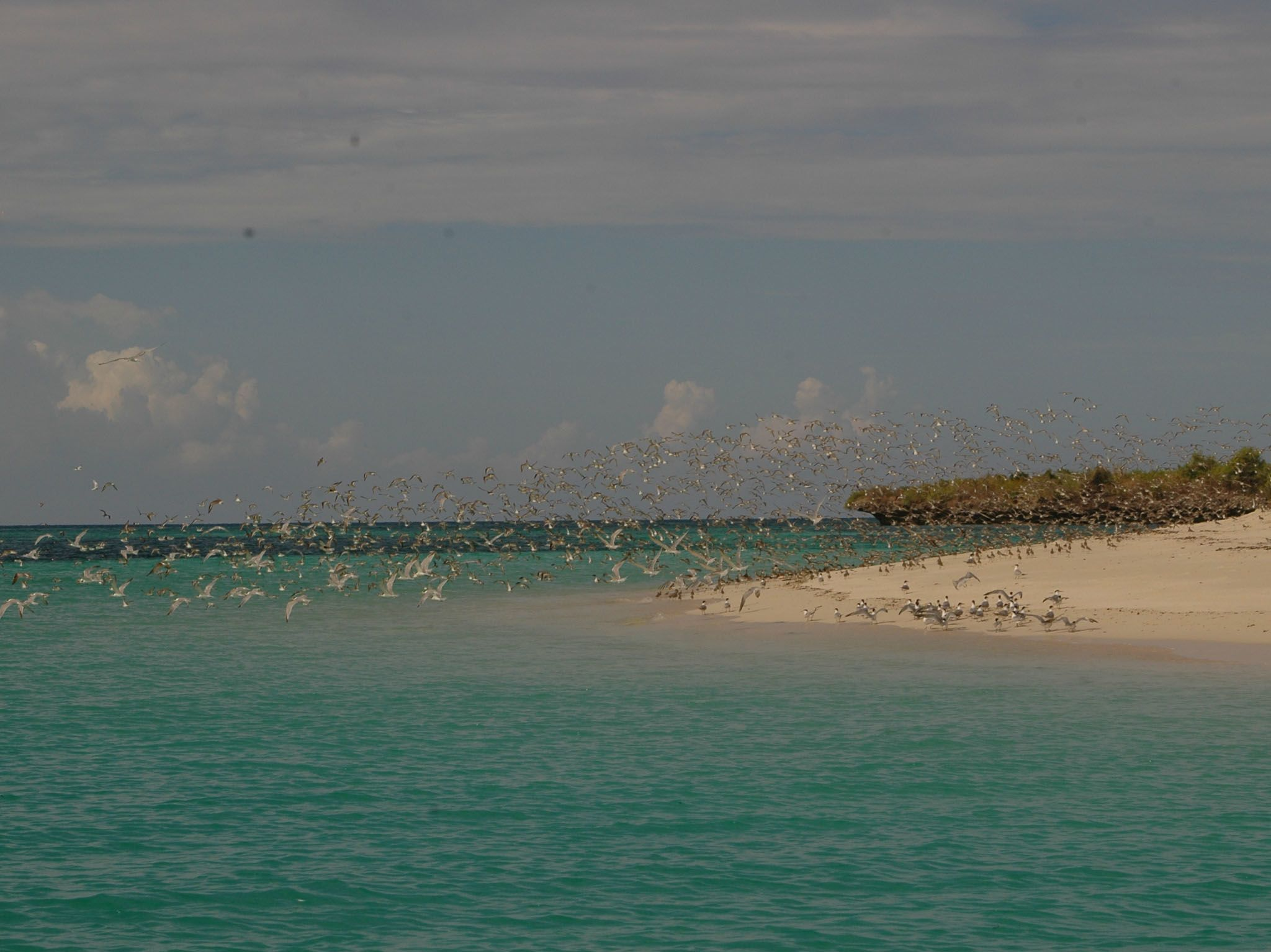 Fanjove Island, Tanzania - Birds on the island. This is from Jane Goodall: Saving Paradise [Photo of the day - May 2021]
