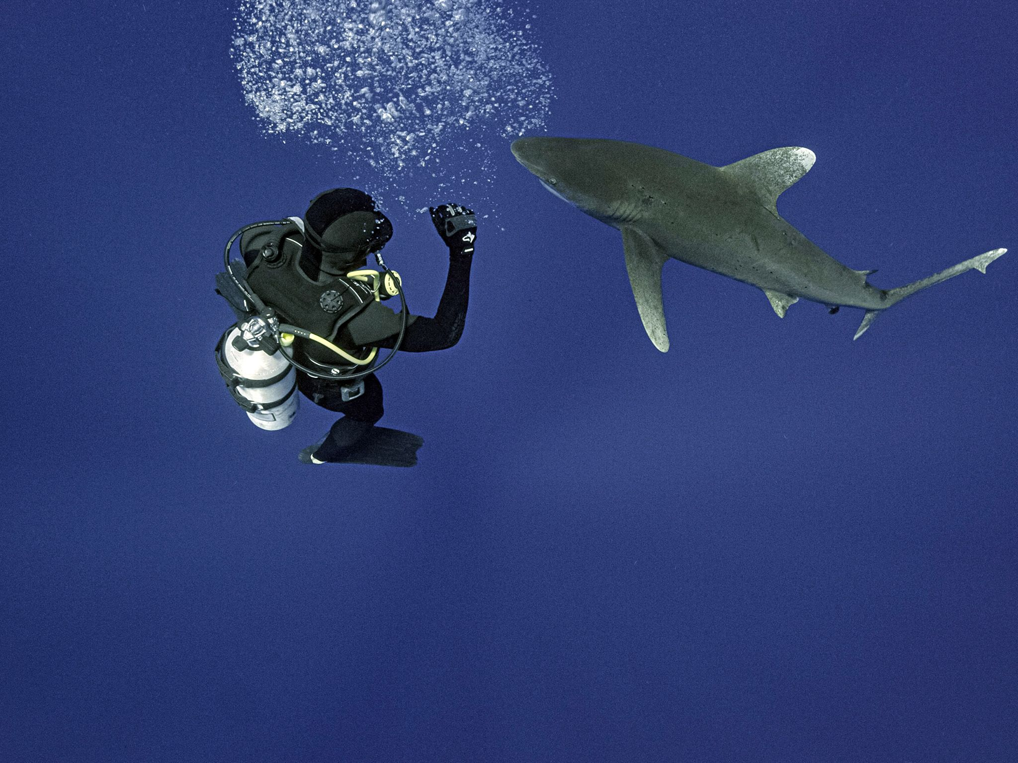 Marine researcher Eric Schneider dives with an oceanic whitetip shark.  This is part of World's... [Photo of the day - July 2021]