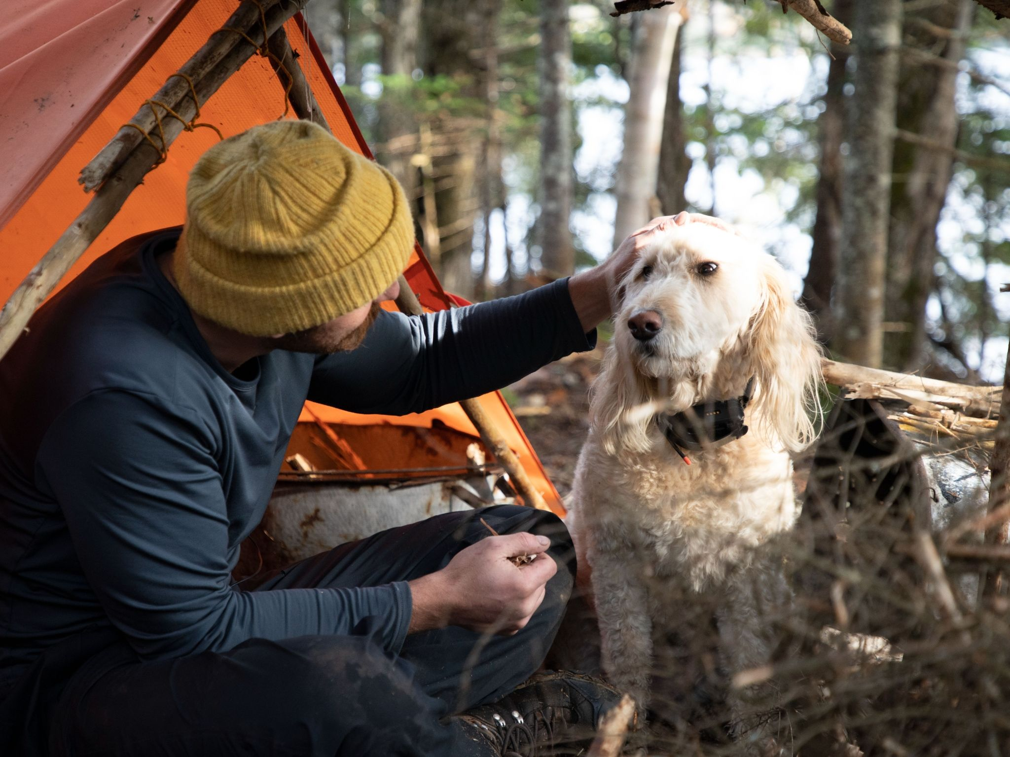 Dane looks to goldendoodle Willow and pets her on her head.  This is from Called to the Wild. [Photo of the day - August 2021]