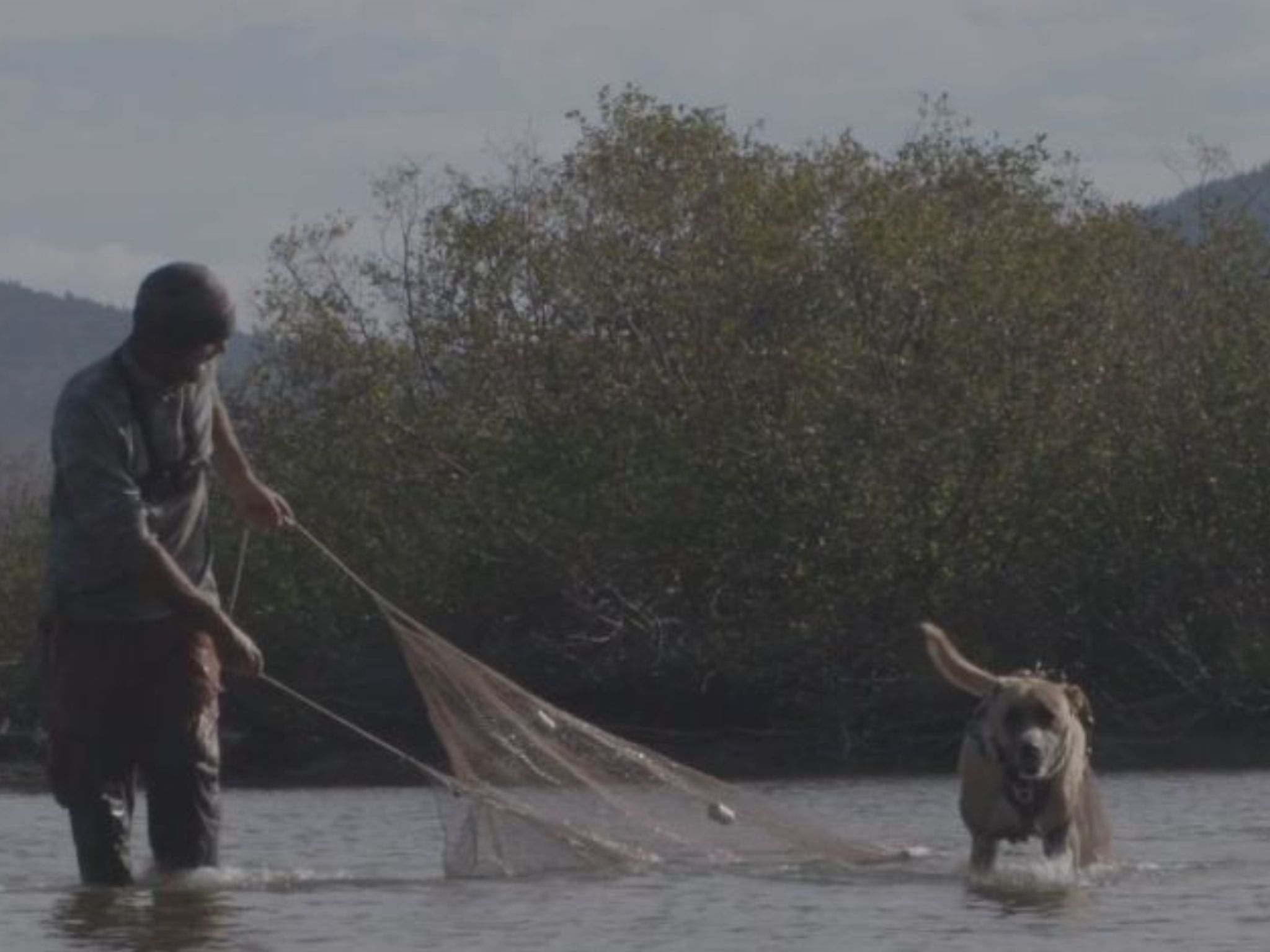 Dub Paetz and his dog Hank trying to catch fish in a seine net. This is from Called to the Wild. [Photo of the day - August 2021]