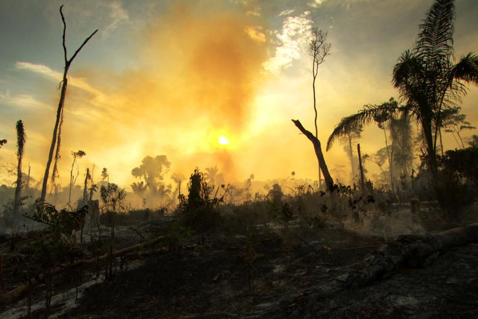 The Amazon Rainforest is suffering rapid deforestation at the hands of people that use logging... [Photo of the day - July 2012]