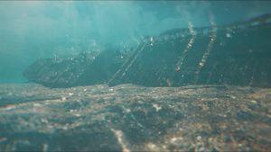 صورة تحت الماء من... [Photo of the day - 26 أكتوبر 2021]