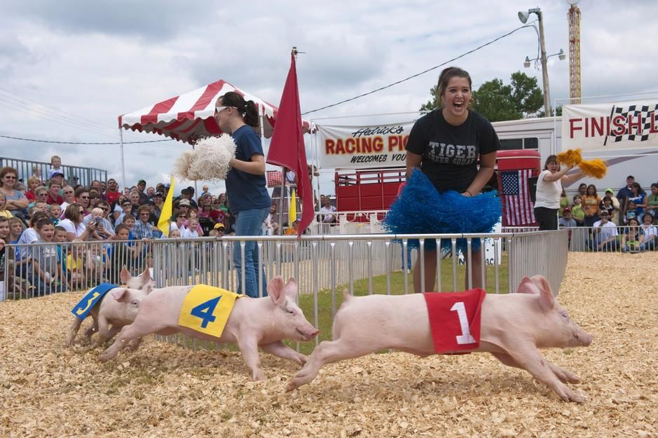 Cheering for a pig race at the Kansas State Fair. USA. [Photo of the day - September 2011]