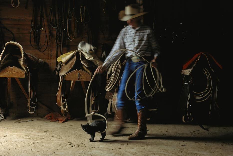 راعي البقر جوستن جونسون يلعب مع هرة بالحبل، تكساس.... [Photo of the day - أكتوبر 2011]