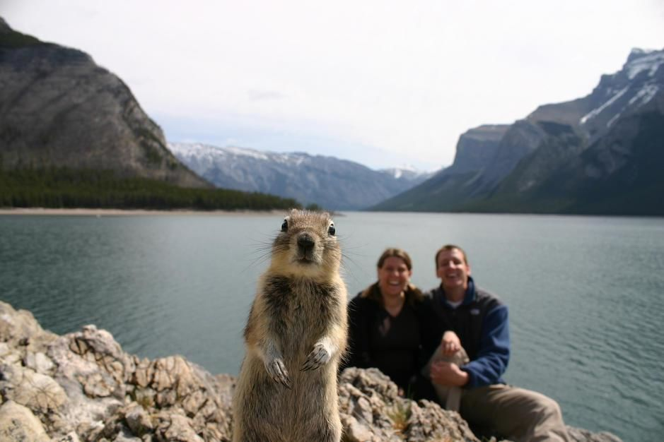 A squirrel steals the shot by tripping the wire to a couple's camera, Alberta. Canada. [Photo of the day - October 2011]